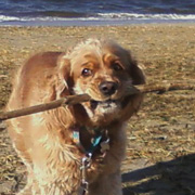 Carmie on her Beach Walk