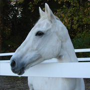 Image of White Horse