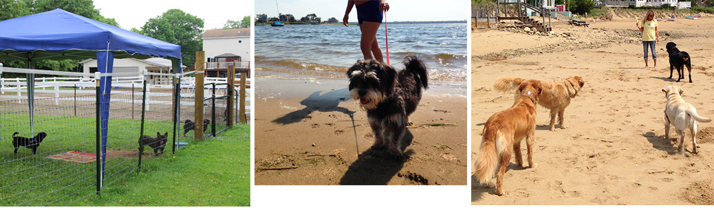 Dog Walking and Doggie Day Care at Seacoast Pet Sitting