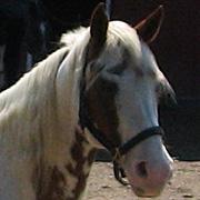 Argentina - Newbury Equine Rescue