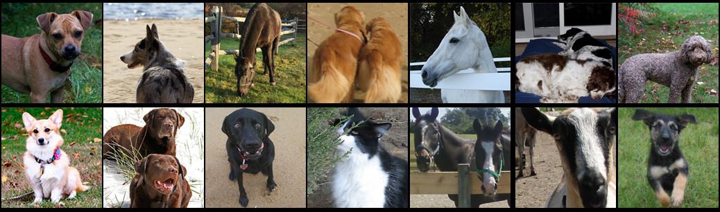 Testimonials Pets Image