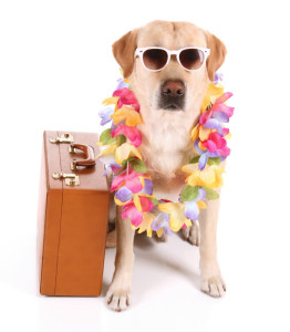 Take your Pampered Pooch on Vacation