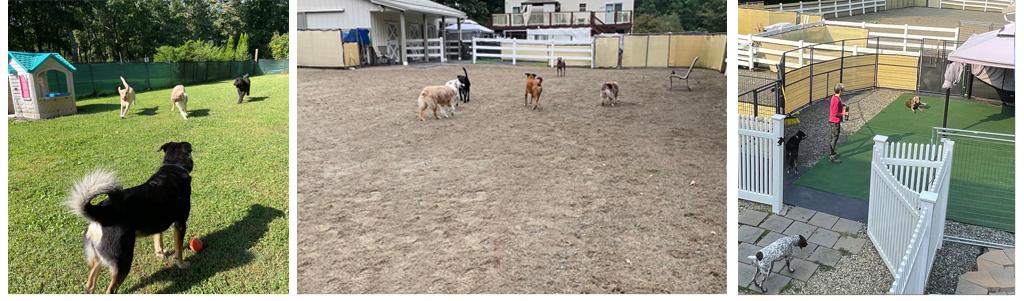 Seacoast Pet Care Home Image